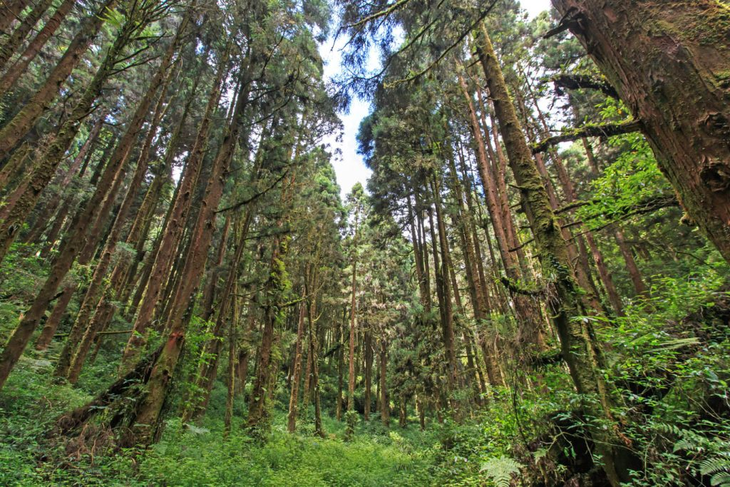 Xitou forest in Nantou, Taiwan